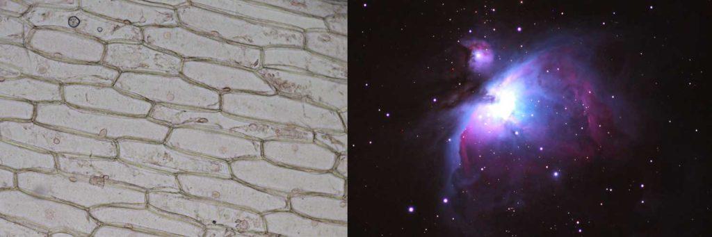 cellula-nebulosa