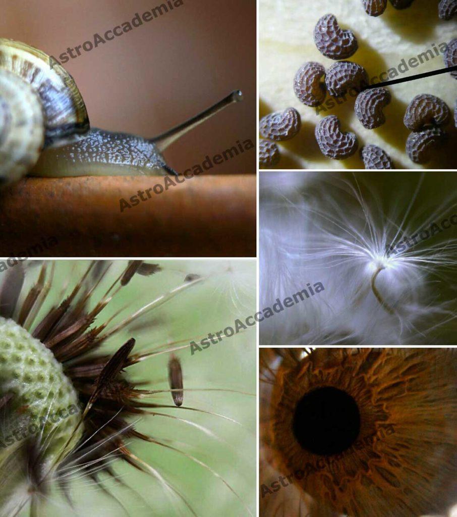 In alto a sinistra: una lumaca - In basso a sinistra: un soffione In alto a destra: semi di papavero - al centro a destra: un soffione - in basso a destra: iride umana